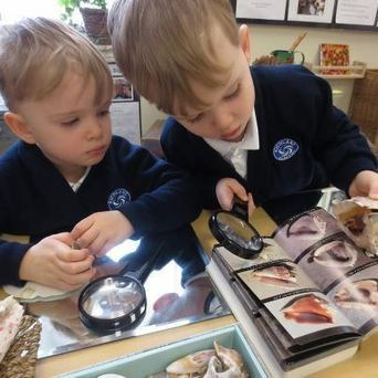 Photography as Language in Reggio Inspired Documentation: Considering Visual Literacy in Practice | Learning Stories VMPS | Scoop.it