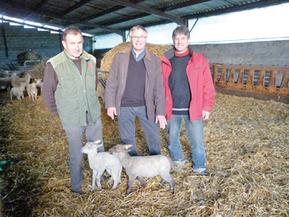 Union de l'IGP Agneau du Périgord et du label rouge des Pays   Agriculture en Dordogne   Scoop.it