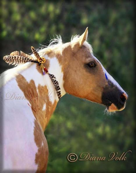 ::: PHOTOGRAPHY :: Another Beautiful Capture by Diana Volk Photography | The Art of the Horse | Scoop.it