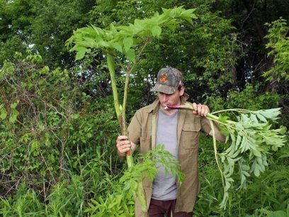 Researchers Have Found That Plants Know They Are Being Eaten   TOK Resources   Scoop.it