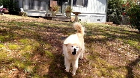 Education can help prevent dog bites - MyFox Atlanta | Dog Training - Mark Mendoza | Scoop.it