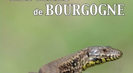 PUBLICATION: Les Reptiles fossiles de Bourgogne | benjamin brigaud | Scoop des Histoires Naturelles | Scoop.it