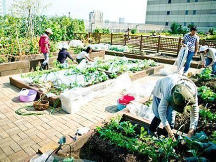 La nuova economia verde trasforma il balcone in orto - Corriere della Sera | Coltivare l'orto | Scoop.it