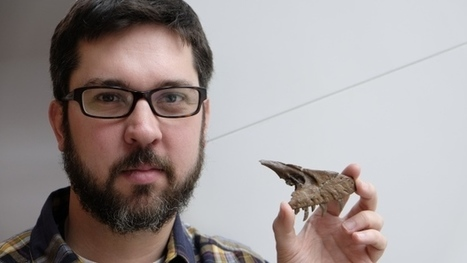 Dinosaurs for sale: How fossil business impacts science - CBC.ca | Reading Pool | Scoop.it