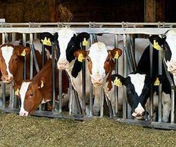 Improving climate protection in agriculture | Dairy Farming | Scoop.it