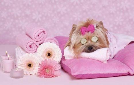 Migliori SPA per cani in Italia: i centri benessere per gli amici a 4 zampe - My Luxury | Dog Style | Scoop.it
