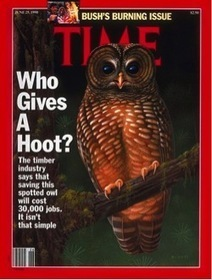 Save the Owls by Shooting the Owls!   Content Marketing   Scoop.it