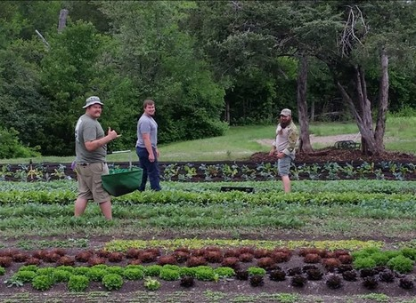 Urban Farmers Create Healing Space for Dallas Veterans | Vertical Farm - Food Factory | Scoop.it