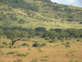 Savanna vegetation predictions best done by continent | Sustain Our Earth | Scoop.it