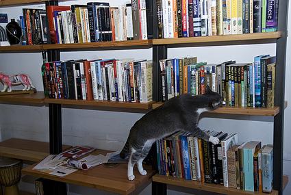 Belgique : Cocaïne et herpès dans les livres d'une bibliothèque | Rat de bibliothèque | Scoop.it