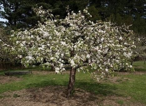A Beginner's Guide to Pruning Fruit Trees - Organic Authority | Garden Ideas by Team Pendley | Scoop.it