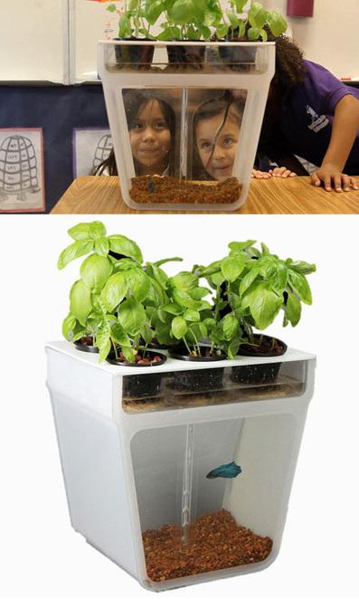 Self-Cleaning Fish Tank + Garden Turns Waste to Fertilizer | Designs & Ideas on Dornob | Designer | Scoop.it