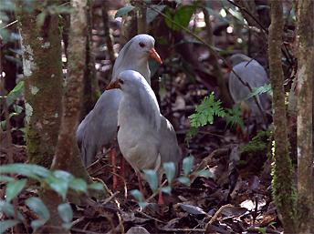 2 - Nouvelle Calédonie : une faune et une flore uniques au monde ! | Biodiversité NC | Scoop.it