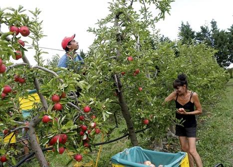 Il y aura plus de boulot cette année en Vaucluse - La Provence | Emploi Formation Métiers | Scoop.it