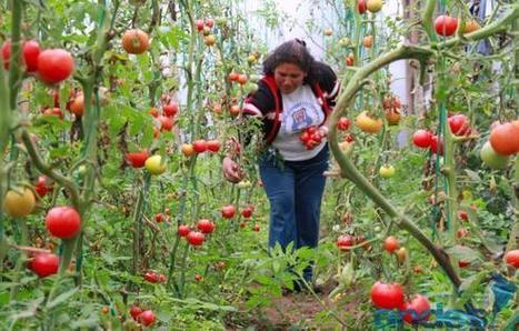 Dentro de la ciudad, la tierra también produce -Ecuador | Cultivos Hidropónicos | Scoop.it