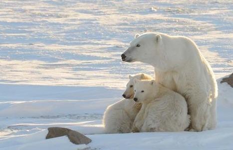 Arctic faces 'significant challenges' - Montreal Gazette | Salem Sound Science | Scoop.it