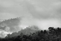 Forests as Rainmakers: New Study Lends Credence to Theory | The Energy Collective | Sustain Our Earth | Scoop.it