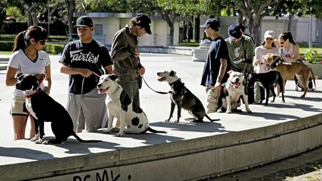 People who yell at their dogs are very likely to end up with dogs that don't listen | Modern dog training methods and dog behavior | Scoop.it