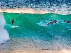 Making waves on a thrilling surfing ride with dolphins - Express.co.uk | Aguaventure | Scoop.it