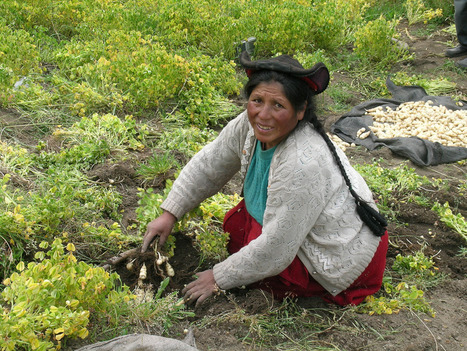 Farming, Native American style | The Why Files | Ethnobotany in the US Mid Atlantic | Scoop.it
