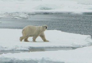 U.S policy harms people, kills more polar bears « Woods and Waters | NWT News | Scoop.it