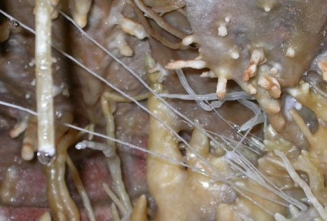 Bacteria Found Thriving In Harsh Cave Systems   redOrbit   CALS in the News   Scoop.it