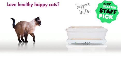 Tailio.com è il nuovo progetto tech per i gatti | AmicoMaineCoon.it | Scoop.it