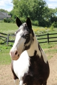 Meet The Horses | Ready Set Ride Therapeutic Recreation Facility | ReadySetRide.org | Cutting Edge Topic 2&3 | Scoop.it
