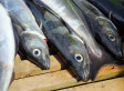Climate Change Could Mean Smaller Fish By Mid-Century | adapting to climate change | Scoop.it