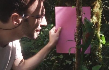 VIDEO. C'est vrai que les caméléons changent de couleur à leurs guise?   De Natura Rerum   Scoop.it