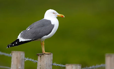 Conservation agency approved cull of endangered birds, documents show | Leading for Nature | Scoop.it