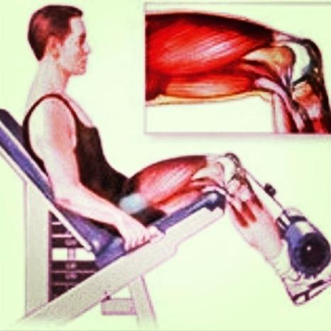 Máquina especializada en el fortalecimiento de los cuádriceps #fitness http://t.co/S98h6gJUoW | @hectorarturo | Scoop.it