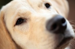 8 Amazing Facts About Dogs | Dailysmash.co.uk | Animals | Scoop.it