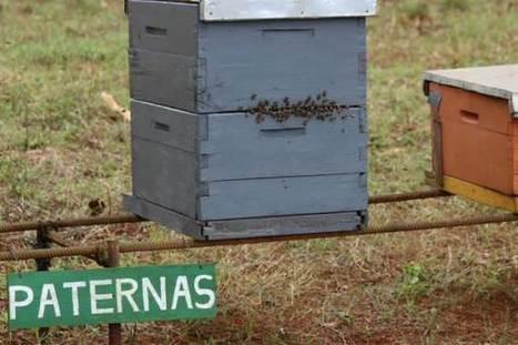 Cuba's organic honey exports create buzz as bees die off elsewhere | Sustain Our Earth | Scoop.it