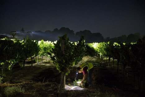 2016 looks fruitful for California wineries after a hard year | Vitabella Wine Daily Gossip | Scoop.it