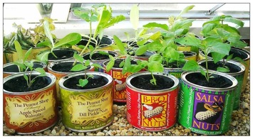 Twitter / InvitedAlong: Spent the afternoon planting ... | Container Gardening | Scoop.it