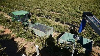 French wine could get pricey, climate change study says | Vitabella Wine Daily Gossip | Scoop.it