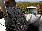 Spain Wine Consumption Plummets as Baron de Ley Sees Future Abroad: Retail | actualité-buduquebec | Scoop.it