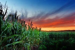 Biocarburants avancés : séparer le bon grain de l'ivraie | Biocarburants et biogaz | Scoop.it