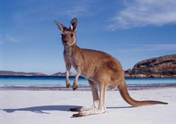 Rusty Solomon Is From Australia | Business | Scoop.it