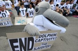 Environmentalists protested in Tokyo against annual dolphin hunt - The Tokyo Times | Intrepid #Cove #Guardian @ManiNeptune | Scoop.it