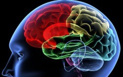 New Study: Feel-Good Hormone Dopamine may Boost Memory | Lethbridge Chiropractic Care for Family, Personal or Business Wellness | Scoop.it