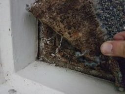 Water Damaged Carpet Can Quickly Turn Into Moulded Carpet | Capital Facility Services | Scoop.it