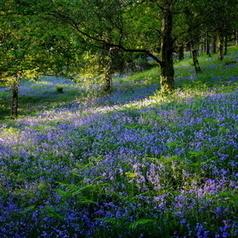 Bluebell Wood | Fujifilm X-Series Cameras | Scoop.it