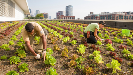 Rooftop Farming Is Getting Off The Ground | Cultivos Hidropónicos | Scoop.it