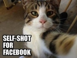 So you�ve decided to take a cat selfie. This is a good choice for any cat to make! If you follow these few important guidelines, all of the other cats will love your new pic on Cat Facebook. Let�s ... | Cats | Scoop.it