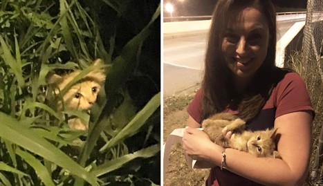 Stray Kitten Rescued By TV Reporter Filming Live Newscast   Compassion in Action   Scoop.it