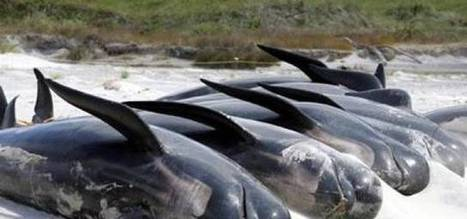 7 animal suicides that baffle animal behavior | Weirdest Animal Behaviors | Scoop.it