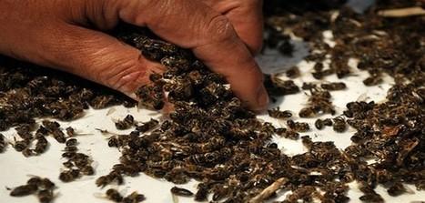 37 millions d'abeilles retrouvées mortes au Canada | Santé | Scoop.it