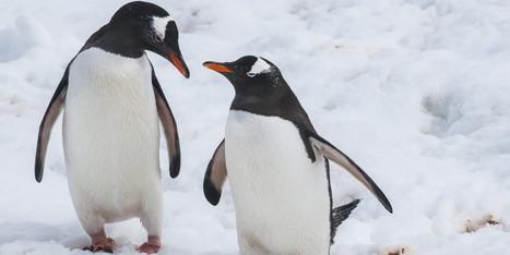 A Brand New Lesbian Love Story In The Animal Kingdom | GLBTAdvocacy | Scoop.it